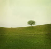 Alone tree on meadow Royalty Free Stock Photo