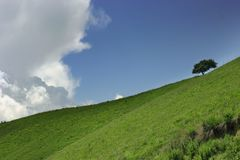 Alone tree on the meadow slope. Cloud Stock Image