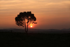 Alone tree on meadow at sunset. With sun Royalty Free Stock Image