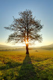 Alone tree on meadow at sunset with sun and mist Royalty Free Stock Images