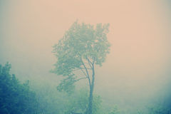 Alone tree in the middle of the forest Royalty Free Stock Photography