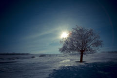Alone tree and moon in night. Beautiful white winter. Black sky Royalty Free Stock Photography