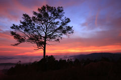 Alone tree in morning. Alone tree in amazing dawn Stock Photo