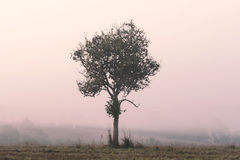 Alone tree with morning fog Stock Images