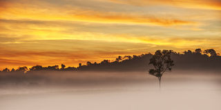 Alone tree in morning Stock Images