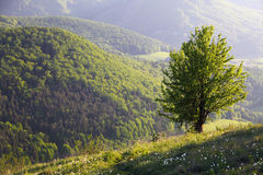 Alone tree in mountain Stock Images