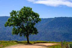 Alone Tree On Mountain with Blue Sky. Road and Alone Tree on Mountain with Blue Sky Stock Photos