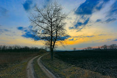 Alone tree near dirt road Royalty Free Stock Photo