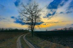 Alone tree near dirt road Royalty Free Stock Photo