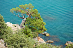 Alone Tree near the sea Royalty Free Stock Photos
