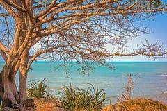 Alone tree near the sea Royalty Free Stock Photography