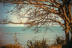 Alone tree near the sea Stock Images