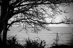 Alone tree near the sea with sky in black and Royalty Free Stock Image