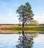 Alone tree near water Stock Image