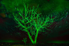 Alone tree on night sky with stars, startrails in unusual green Royalty Free Stock Photo