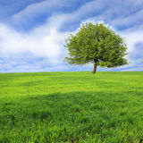 Alone Tree On Meadow Royalty Free Stock Photos