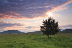 Alone Tree On Meadow At Sunset With Sun Royalty Free Stock Photo