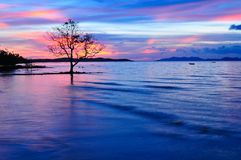 Alone Tree with Red  Blue Sky Twilight  on the beach. Alone Tree with Red  Blue Sky Twilight  on Island Stock Photography