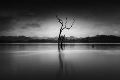 The alone tree. In the reservoir of Thailand Royalty Free Stock Photography