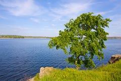 Alone tree on riverside Stock Photo