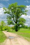 Alone tree and road Stock Image
