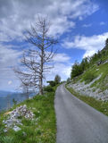 Alone tree and road. Royalty Free Stock Photo