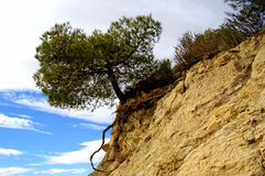 Alone tree on the rock Stock Images