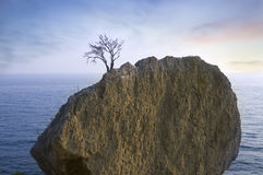 Alone tree on rock in sea Royalty Free Stock Photos