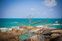Alone tree in rocks on the beach Royalty Free Stock Image