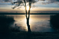 Alone tree at shore of frozen lake Stock Image