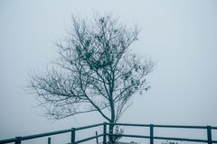Alone Tree silhouette in foggy morning, vintage style. 