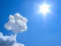 Alone tree in sky. Stock Image