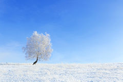 Alone Tree in the snow on a field winter Stock Photo
