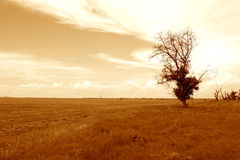 Alone Tree Royalty Free Stock Images