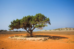 Alone tree in stone desert Stock Photos