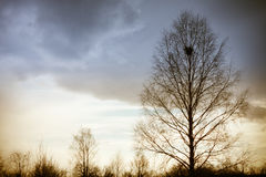 Alone tree before storm Stock Photography