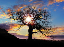 Alone tree with sun and color red orange sky Royalty Free Stock Photos