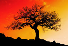 Alone tree with sun and color red orange yellow sky Stock Images