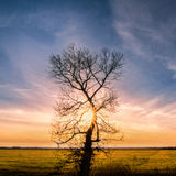 Alone tree with sun rays, green grass Royalty Free Stock Photography