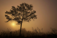 Alone tree sunrise. In the morning sunlight Royalty Free Stock Photos