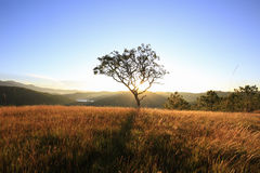 Alone tree sunrise. In the morning sunlight Stock Photos