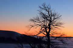 Alone tree on the sunset Royalty Free Stock Images