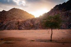 Alone tree at sunset Royalty Free Stock Photo