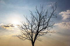 Alone tree with sunset Royalty Free Stock Photography