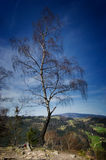 Alone tree on the top of the mountain Royalty Free Stock Photo