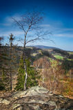 Alone tree on the top of the mountain Stock Photography