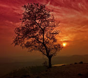 Alone Tree. These are the vibrant colors of the evening Stock Images