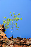 Alone tree on the wall Royalty Free Stock Photos