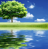Alone Tree with water reflection Stock Photo