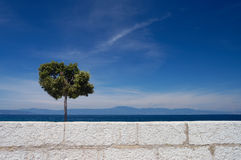 Alone tree and white wall. Tree and beautiful sky and white wall Stock Image